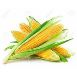 Кукурудза качанна молода