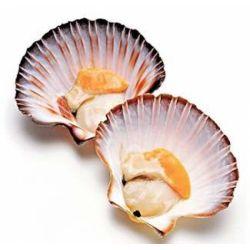 Морський гребінець 30-40