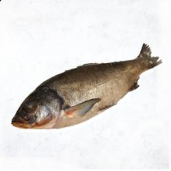 Товстолоб (Дніпровська риба)